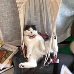 Handwoven Cat Hammock