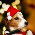 Merry Christmas Small Plush Santa Hat for Pet Dog Cat