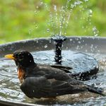 💥50% OFF TODAY💥Solar Powered Hummingbird Fountain and Bionic Bird - Limited Buy 2 Get 1 FREE