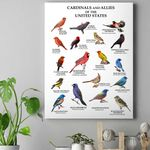 US Cardinals And Allies - Birdwatching Canvas Prints Type A KH24032102
