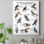 Falcons And Caracaras Of The United States - Birdwatching Canvas Prints Type A KH25032109