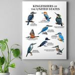 Kingfishers - Birdwatching Canvas Prints Type A KH26032101