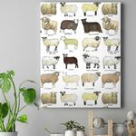 Breeds Of Sheep Canvas Prints Type A QA30032110