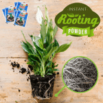 Instant Rooting Powder (Set of 5)
