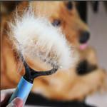 Pet Pro Grooming Tool - LimeTrifle