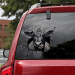 [DT0334-snf-tnt] Angus cattle Crack car Sticker cows Lover