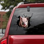 [sk1113-snf-ptd] Pig crack car Sticker Cattle lover