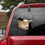 [sk1458-snf-lad] Goat Crack Car Sticker cattle Lover