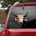 [sk1196-snf-tnt] Brahman Cow Crack Sticker cattle Lover
