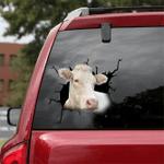 [DT0331-snf-tnt] Charolais cattle Crack car Sticker cows Lover