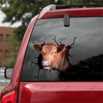 [DT0338-snf-tnt] Angus cattle Crack car Sticker cows Lover