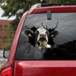 [sk1243-snf-tnt] Dairy Cow Crack Sticker cattle Lover