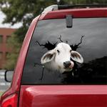 [sk1195-snf-tnt] Brahman Cow Crack Sticker cattle Lover