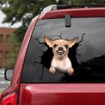 [DA0065-snf-tnt] Chihuahua Crack car Sticker dogs Lover