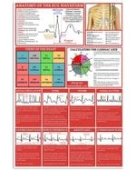 Anatomy Of The Ecg Waveform Views Of The Heart Special Custom Design Vertical Poster