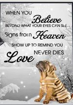 Shar Peis When You Believe Beyond What Your Eyes Can See Signs From Heaven Poster