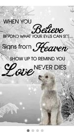 Poodles When You Believe Beyond What Your Eyes Can See Signs From Heaven Poster