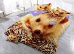 Golden Hedgehog Printed Bedding Set Bedroom Decor