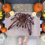 Spider Doormat