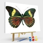 Archonias Butterfly