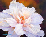 Whispering Hibiscus
