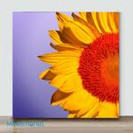 Mini-Sunflowers Mark(Already Framed Canvas)