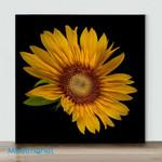 Mini-Big Sunflower(Already Framed Canvas)