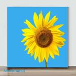 Mini-Sunflower Blue Sky(Already Framed Canvas)