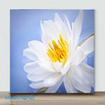 Mini-Lotus Flower(Already Framed Canvas)