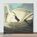 Mini-Trumpeter Swan(Already Framed Canvas)