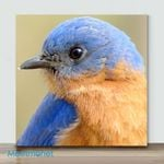 Mini – Bluebirds(Already Framed Canvas)
