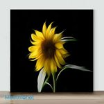 Mini – Newborn Sunflower(Already Framed Canvas)