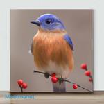 Mini – Cute Bird(Already Framed Canvas)