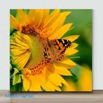 Mini-Sunflower And Butterfly#3(Already Framed Canvas)