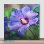 Mini-Purple flower(AlreadyFramedCanvas)