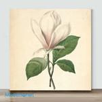 Mini-Magnolia Plate(Already Framed Canvas)