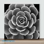 Mini -Black & White Succulent IV(Already Framed Canvas)