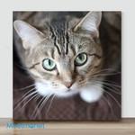 Mini-Watching Cat