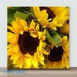 Mini – Golden sunflower#6(Already Framed Canvas)