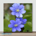 Mini-Little cute flower #6(Already Framed Canvas)