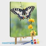 Charming Butterfly 5
