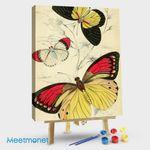 Charming Butterfly 17