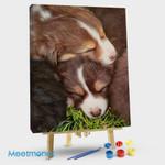 Australian Shepherd Puppy Bundle