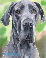 Great Dane I