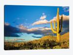 Sunset Saguaro National Park East IV