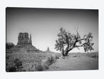 Monument Valley West Mitten Butte And Tree
