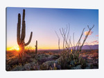 Sunset Saguaro National Park East I