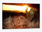 Sunset in The Desert V