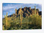 Saguaro Cacti And Superstition Mountains, Lost Dutchman State Park, Arizona I