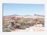 Desert Hues